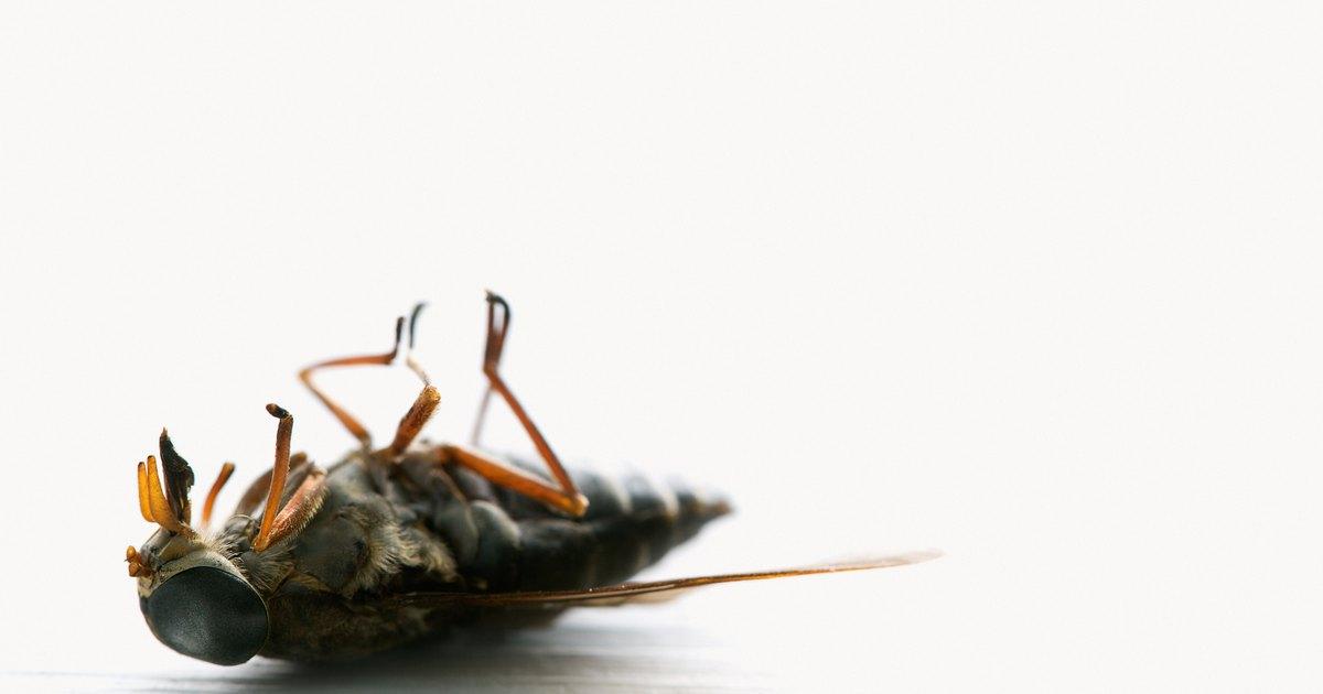 Como eliminar moscas de cavalos do seu rebanho ehow brasil - Eliminar moscas en casa ...