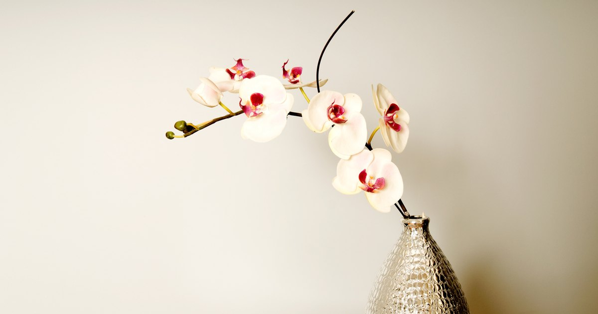 How To Trim Back Orchids After Blooming Ehow Uk