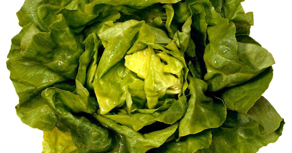 nutritional benefits of butter leaf lettuce ehow uk