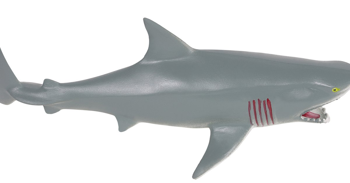 How To Make A Shark Birthday Cake Ehow Uk