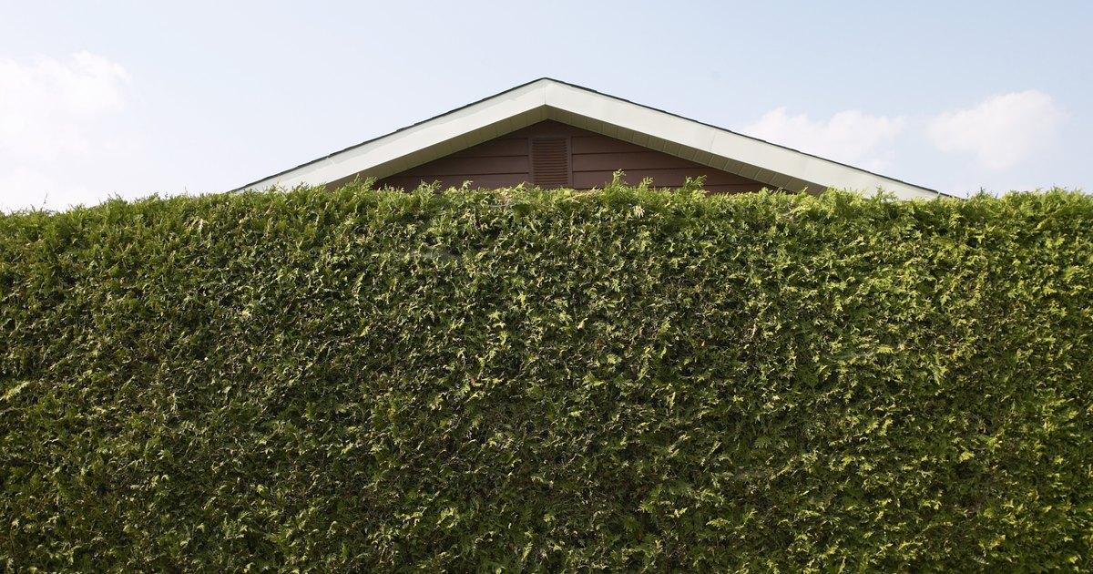 Plants To Block Noisy Neighbors Ehow Uk