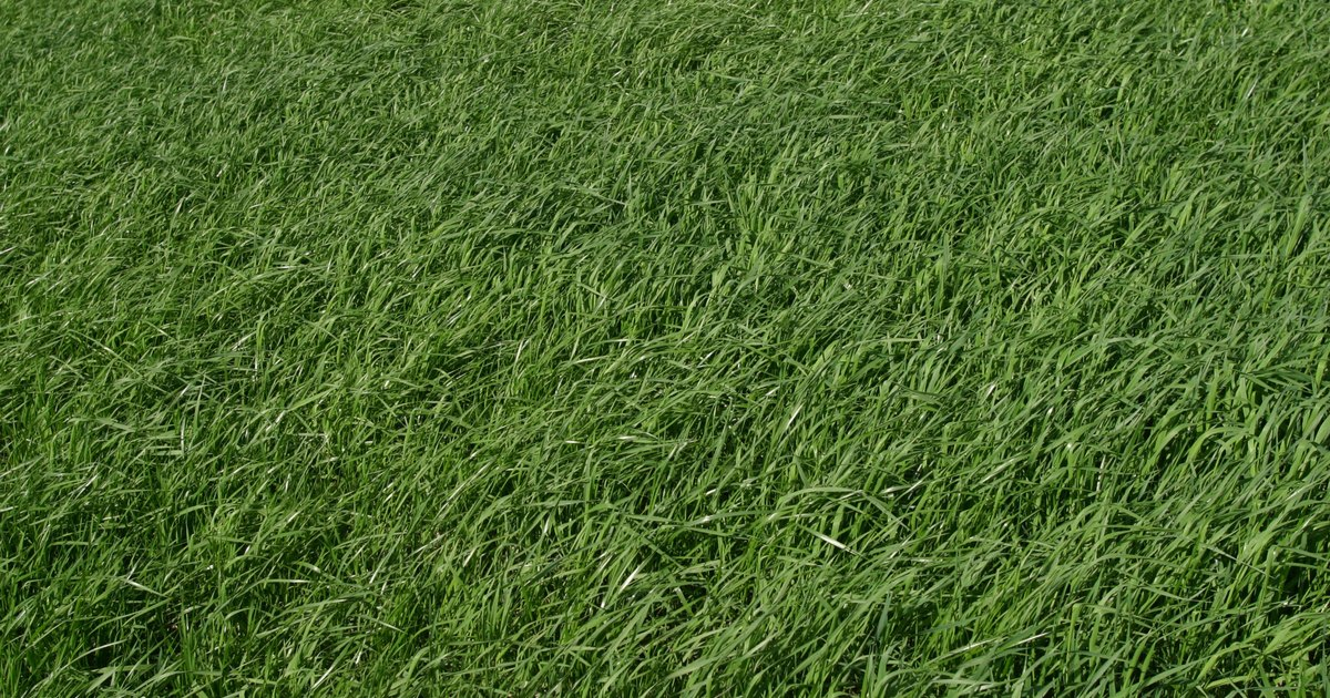 Plantar cesped paso a paso stunning cinco pasos para for Como plantar cesped natural
