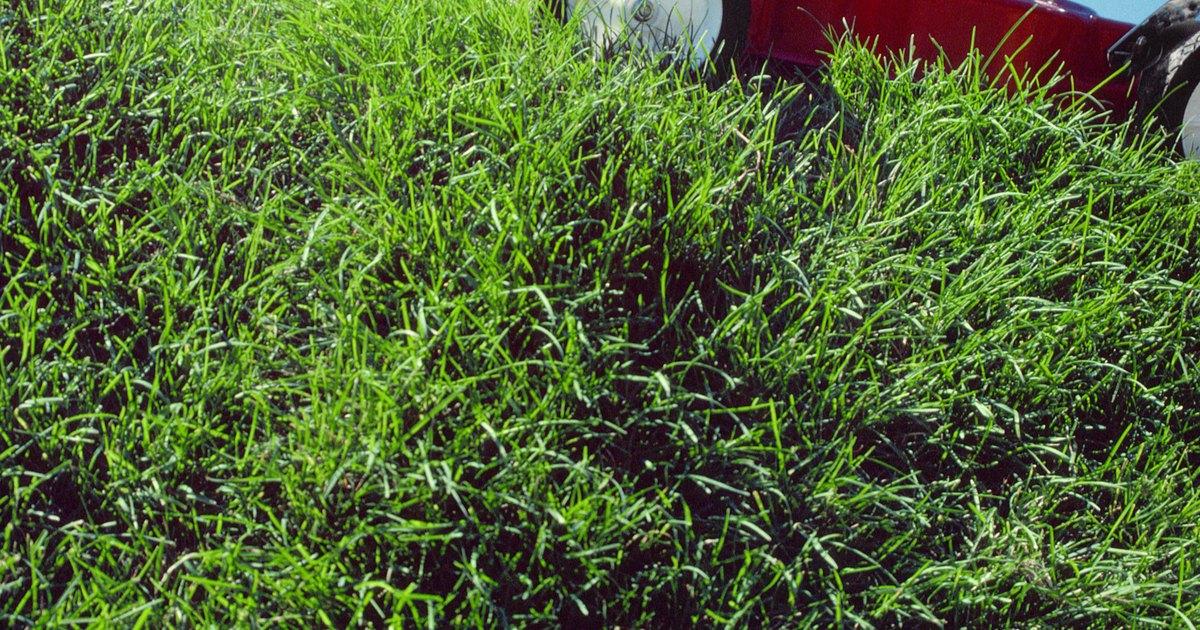 Como cortar grama alta e grossa ehow brasil - Cortar hierba alta ...
