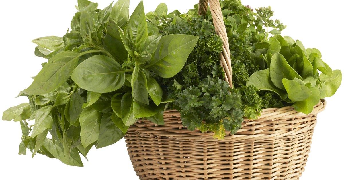 C mo cuidar una planta de albahaca de interiores ehow en for Cultivo de albahaca en interior