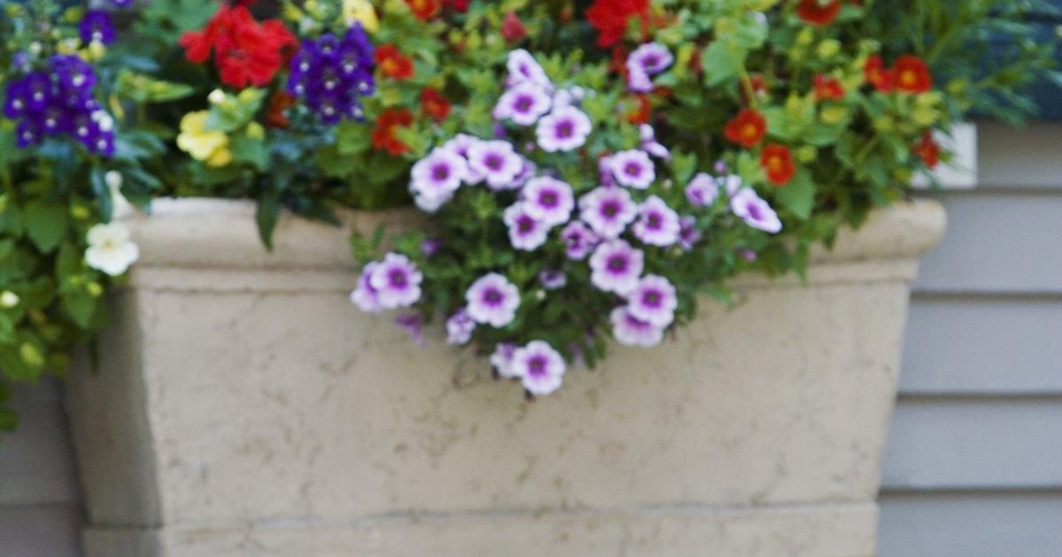 Plantas perennes para macetas ehow en espa ol for Plantas perennes exterior
