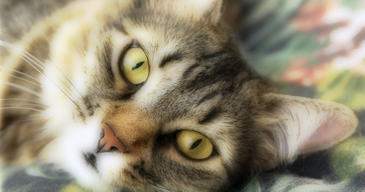 gato sangre heces: