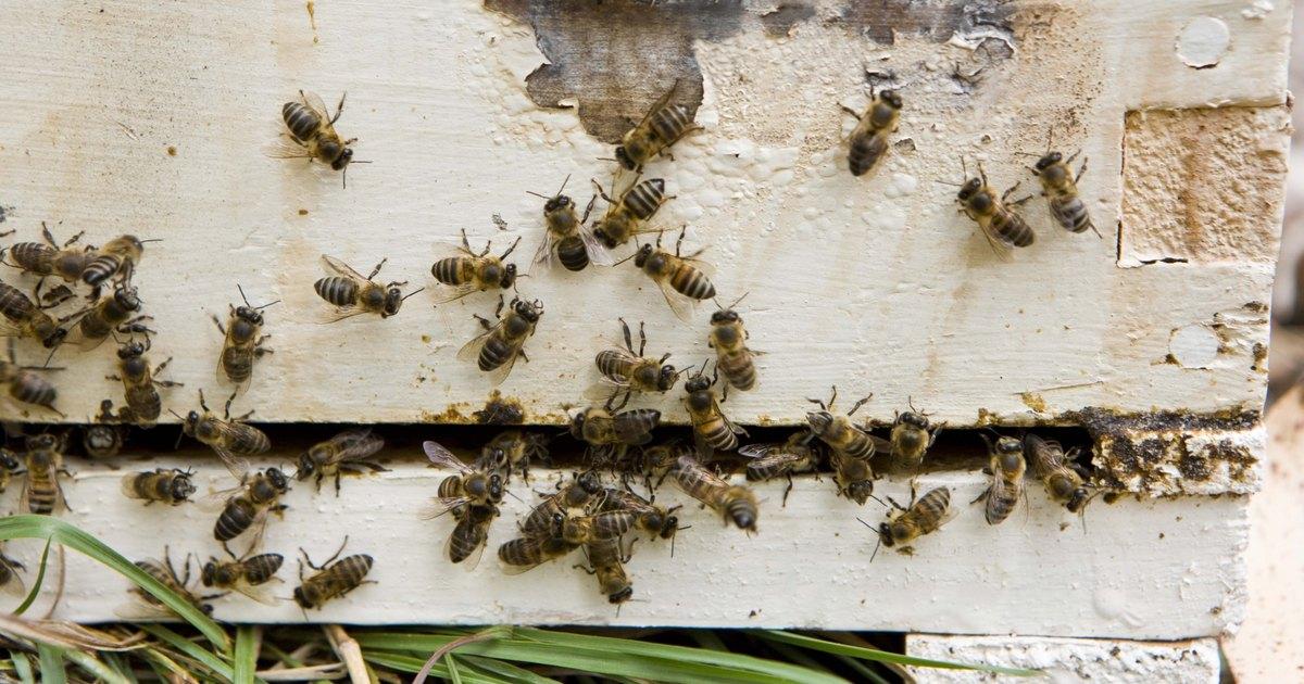 C mo empezar un apiario ehow en espa ol - Como empezar un jardin ...