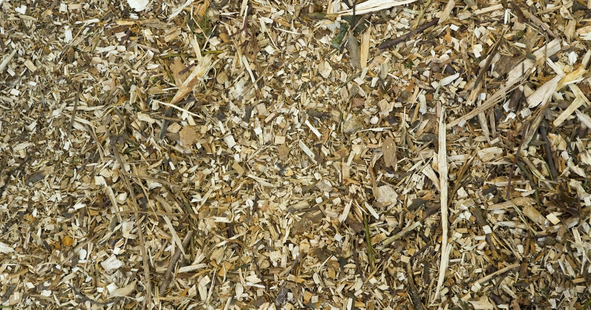 Wood Chip Uses ~ Best should i use wood chips starting