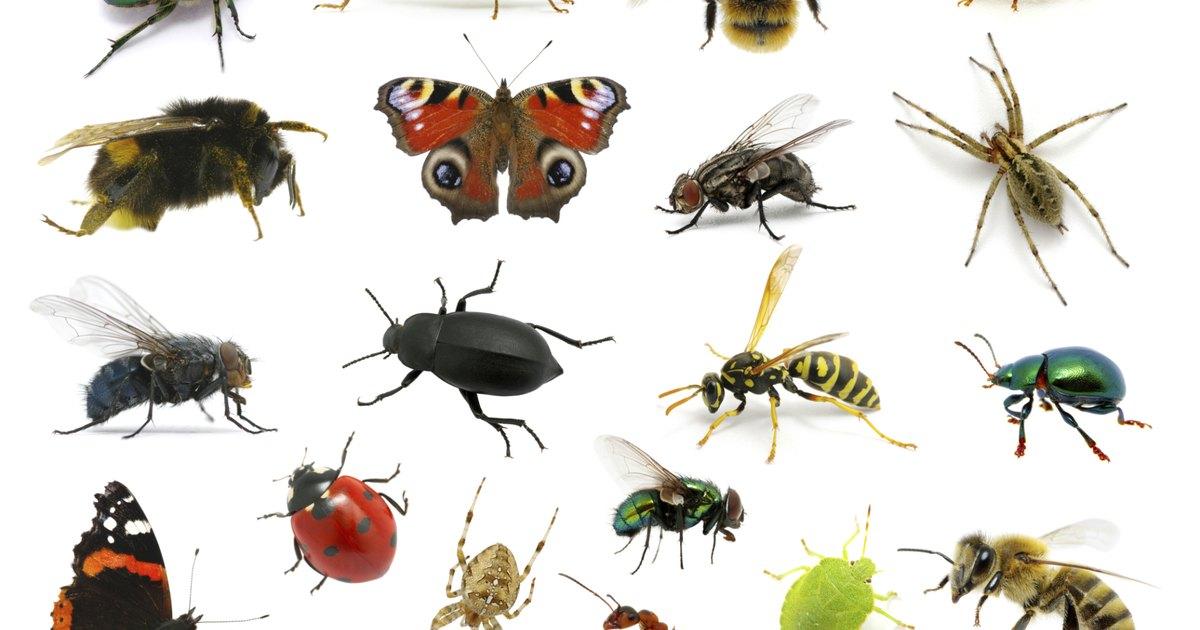 Vocabolario illustrato :: Gli insetti
