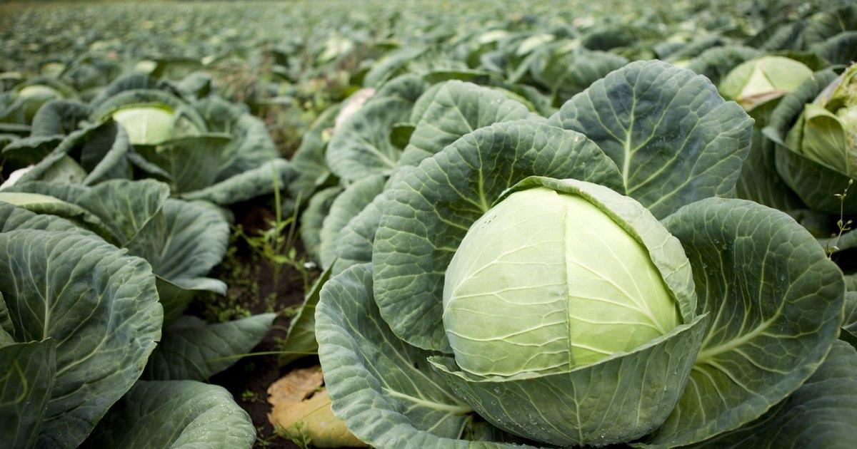 Image Result For Season Vegetable Garden