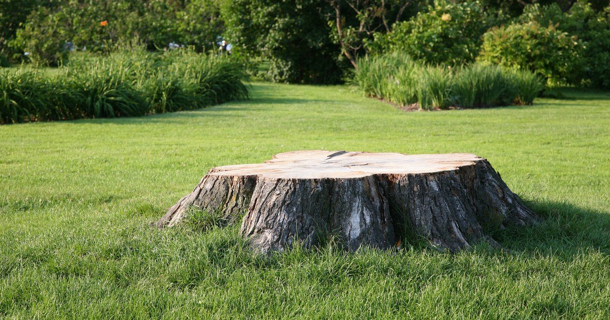 Creative Things To Do With A Tree Stump Ehow Uk