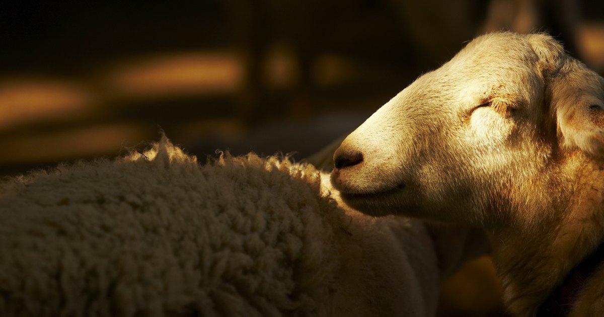 C mo lavar a m quina un abrigo de lana ehow en espa ol - Lavar alfombra de lana en lavadora ...