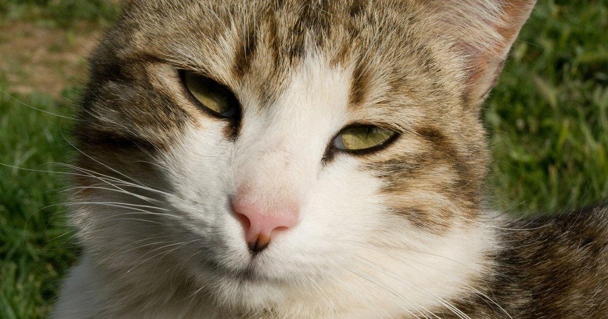Flores e plantas n o venenosas para gatos ehow brasil Plantas seguras para gatos