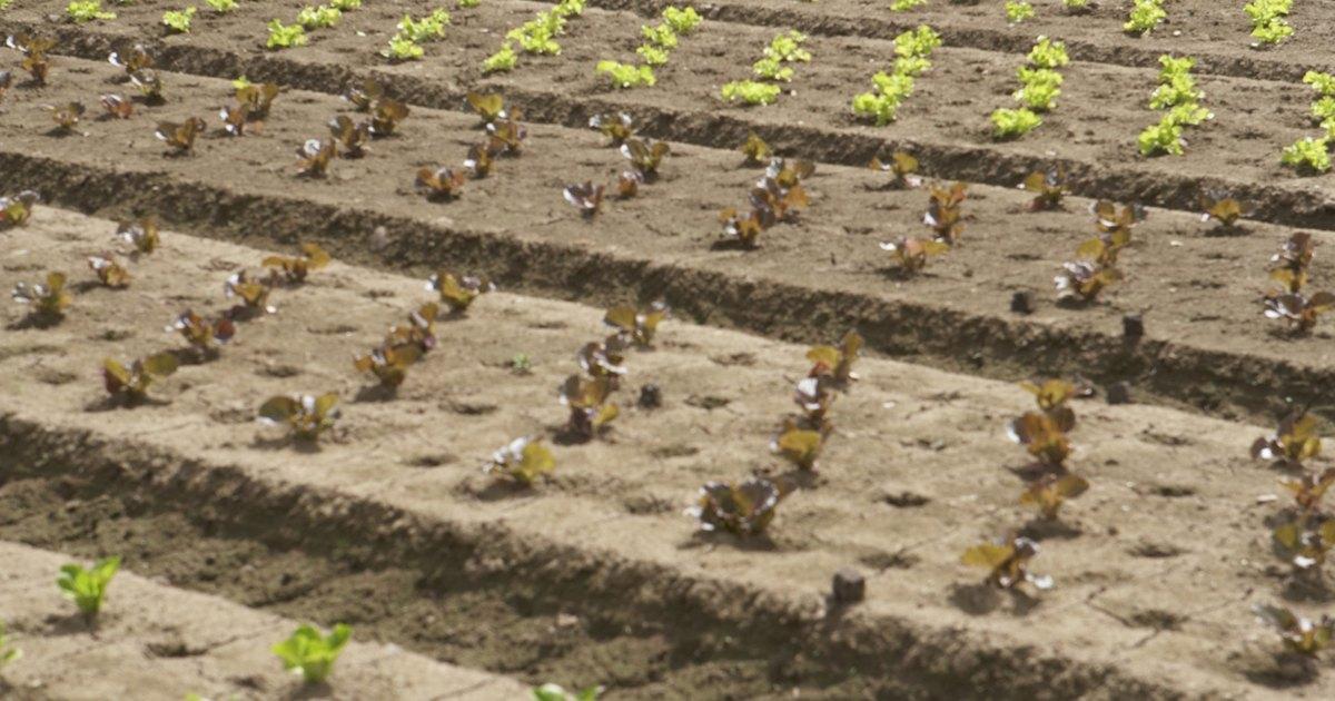 Etapas de preparaci n de la tierra para sembrar ehow en - Preparacion de la tierra para sembrar ...