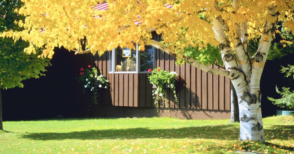 Diez rboles perfectos para tu patio ehow en espa ol for Arboles de jardin para sombra