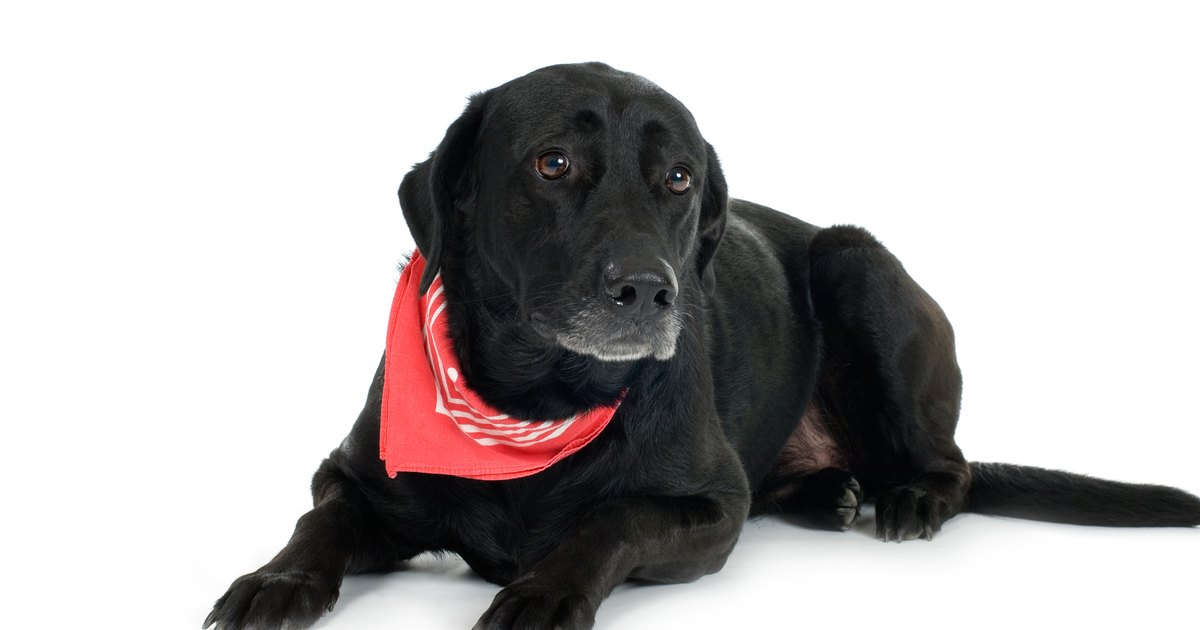 C mo hacer un collar antipulgas natural para perros ehow for Como hacer un collar para perro