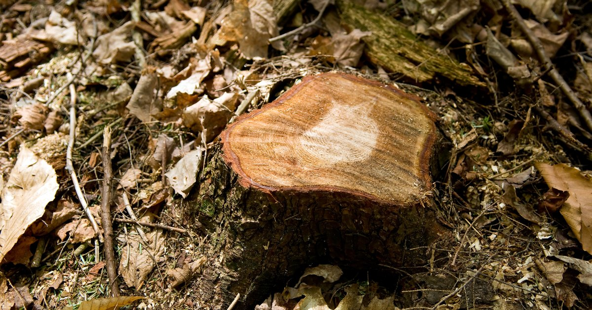 The Best Way to Rot Out a Tree Stump | eHow UK