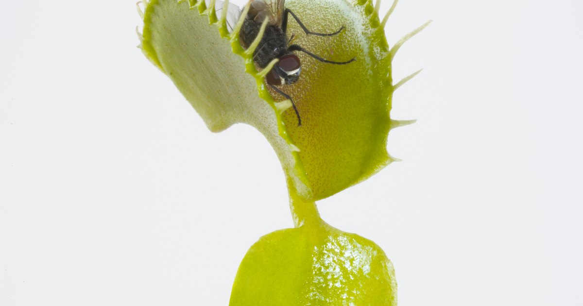 How To Label The Parts Of A Venus Flytrap