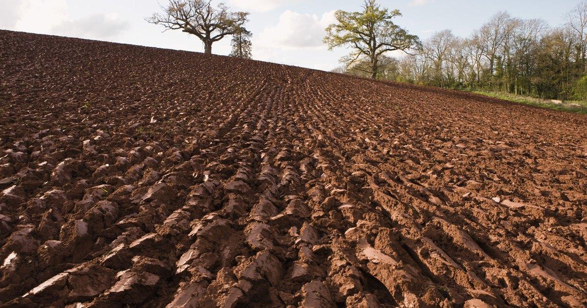 Cinco factores importantes involucrados en la formaci n for Soil meaning in english