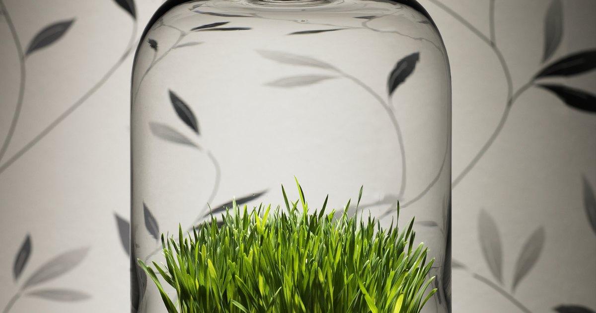 C mo cuidar de la planta siempreviva durante el invierno for Planta perenne en maceta de invierno