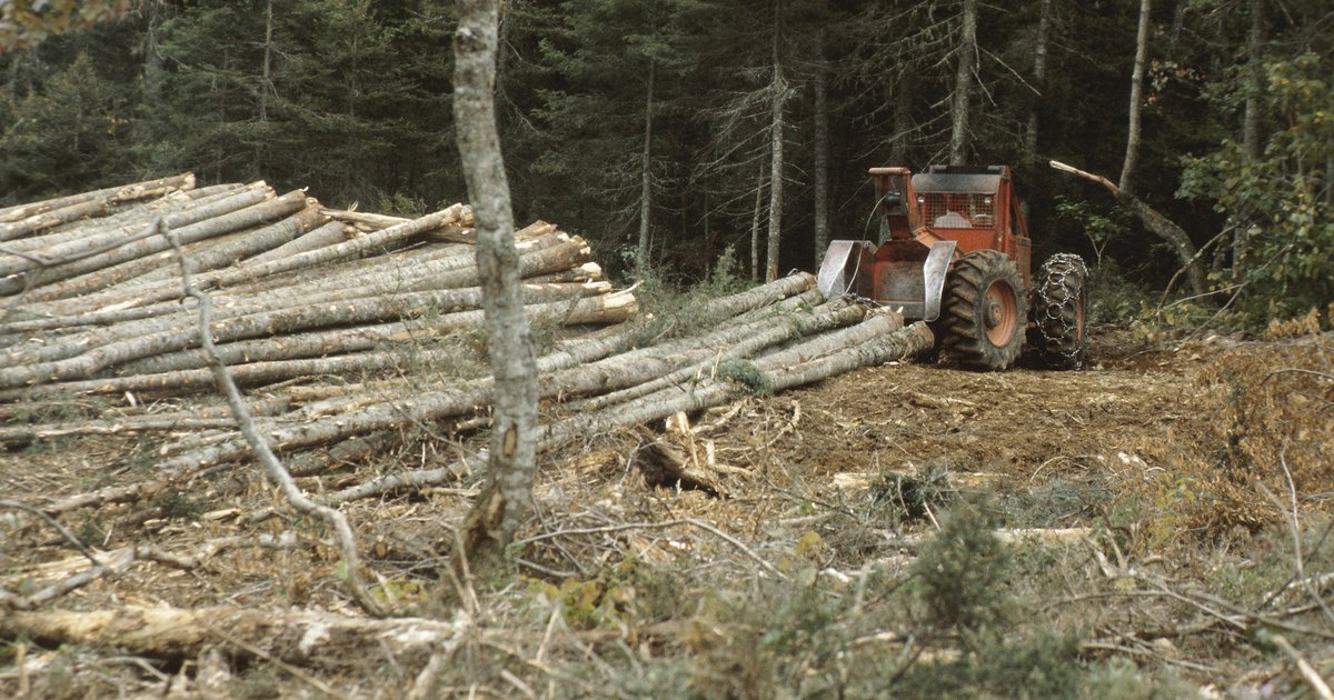 the effects of cutting down trees The impact on the environment is extremely adverse, and there will be terrible   trees sustain freshwater supplies, so if they are cut down, it affects the.