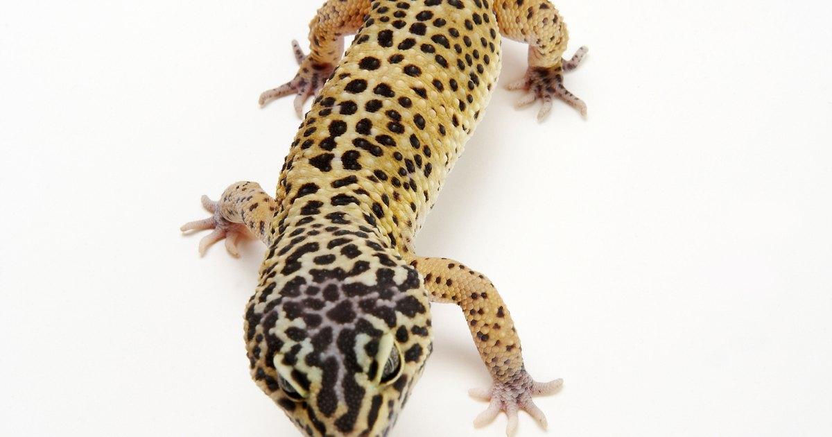 C mo hacer un vivero casero para geckos leopardo ehow en for Como realizar un vivero