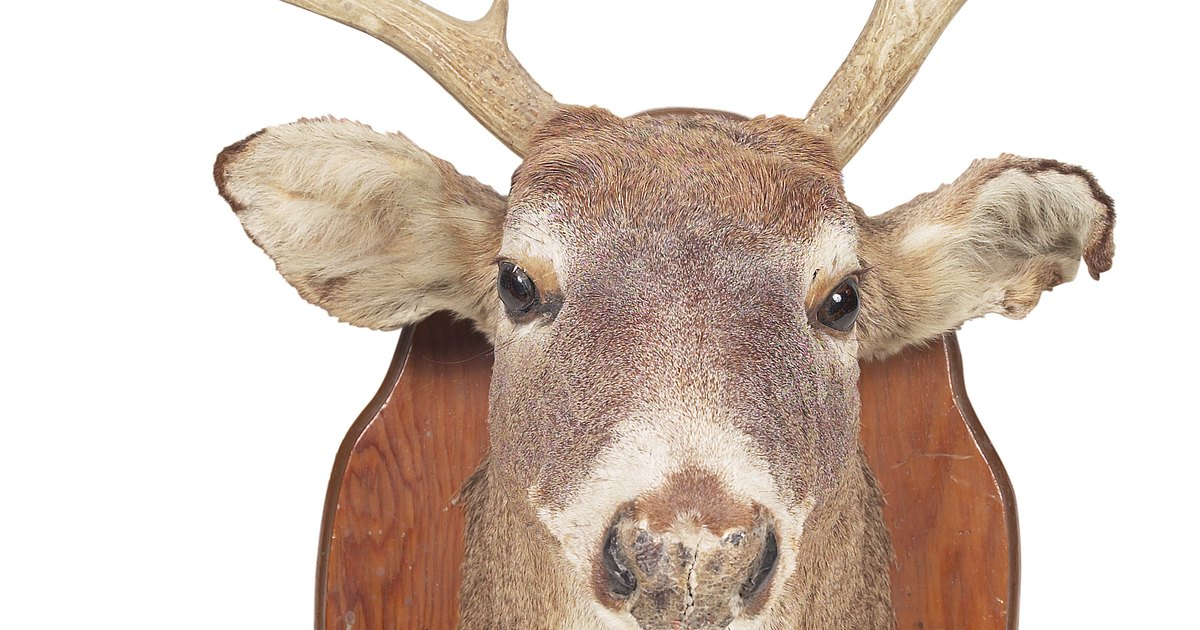 free cardboard taxidermy templates - how to make a cardboard deer head ehow uk
