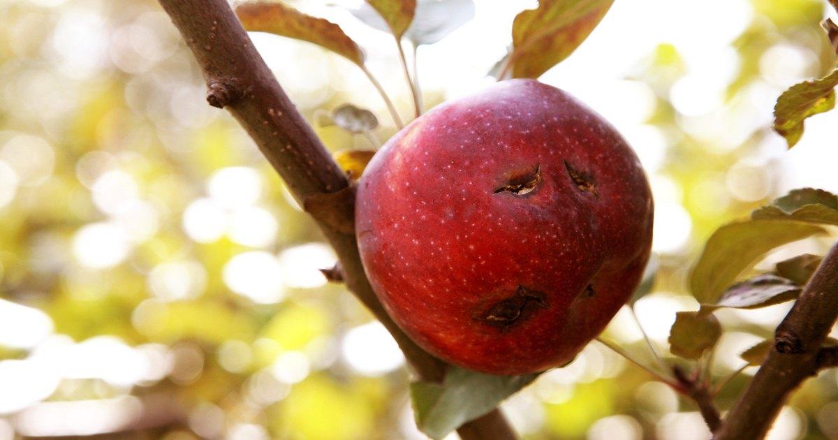 C mo cuidar y fertilizar el huerto de rboles frutales - Como cuidar los arboles frutales ...