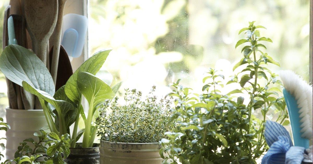Formas naturales para eliminar al mosquito del hongo de la for Como eliminar los mosquitos del jardin