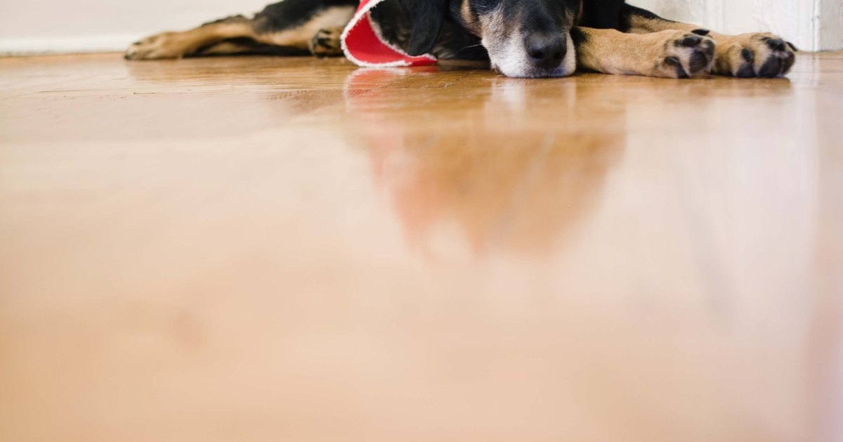 Remove pet urine from wood floors