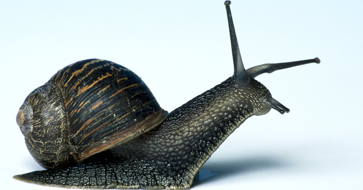 How To Keep Snails Or Slugs Out Of Your Flower Garden Ehow Uk
