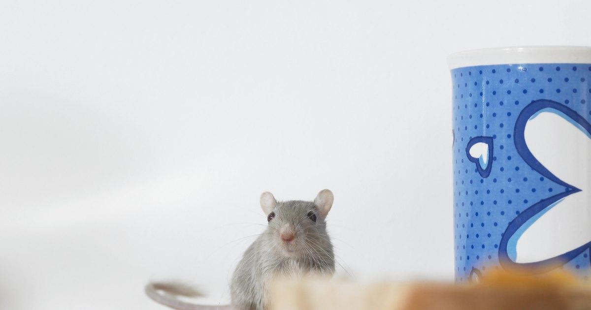 C mo desalentar a los ratones sin veneno ehow en espa ol - Como evitar los ratones ...