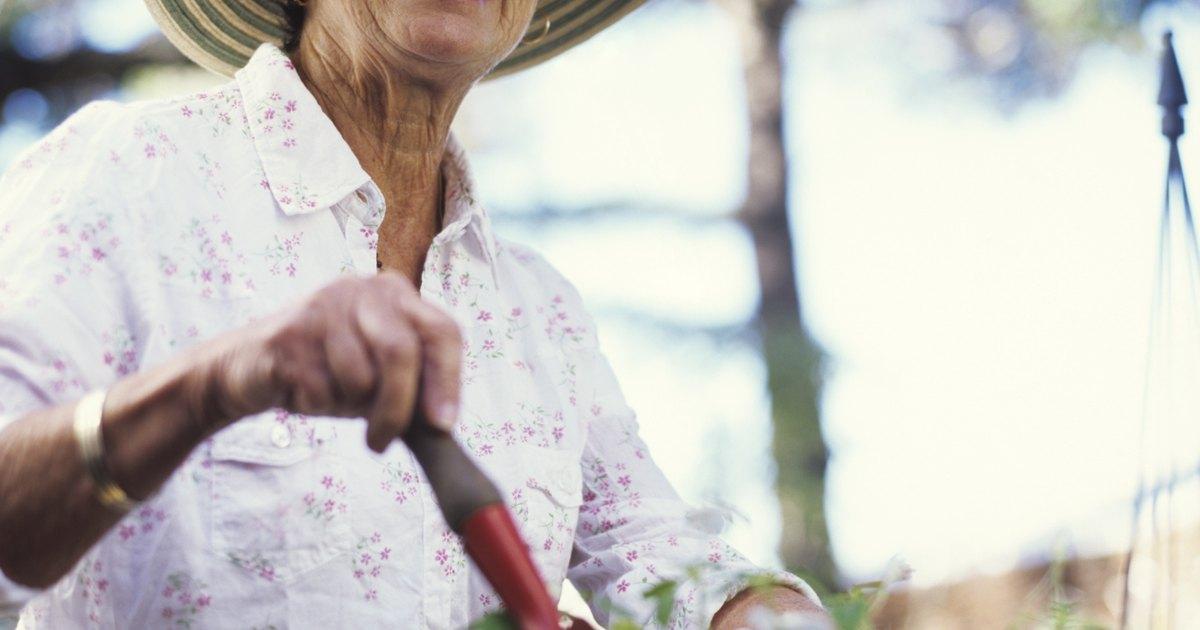 Como plantar cris ntemos em vasos ehow brasil - Como cultivar crisantemos ...