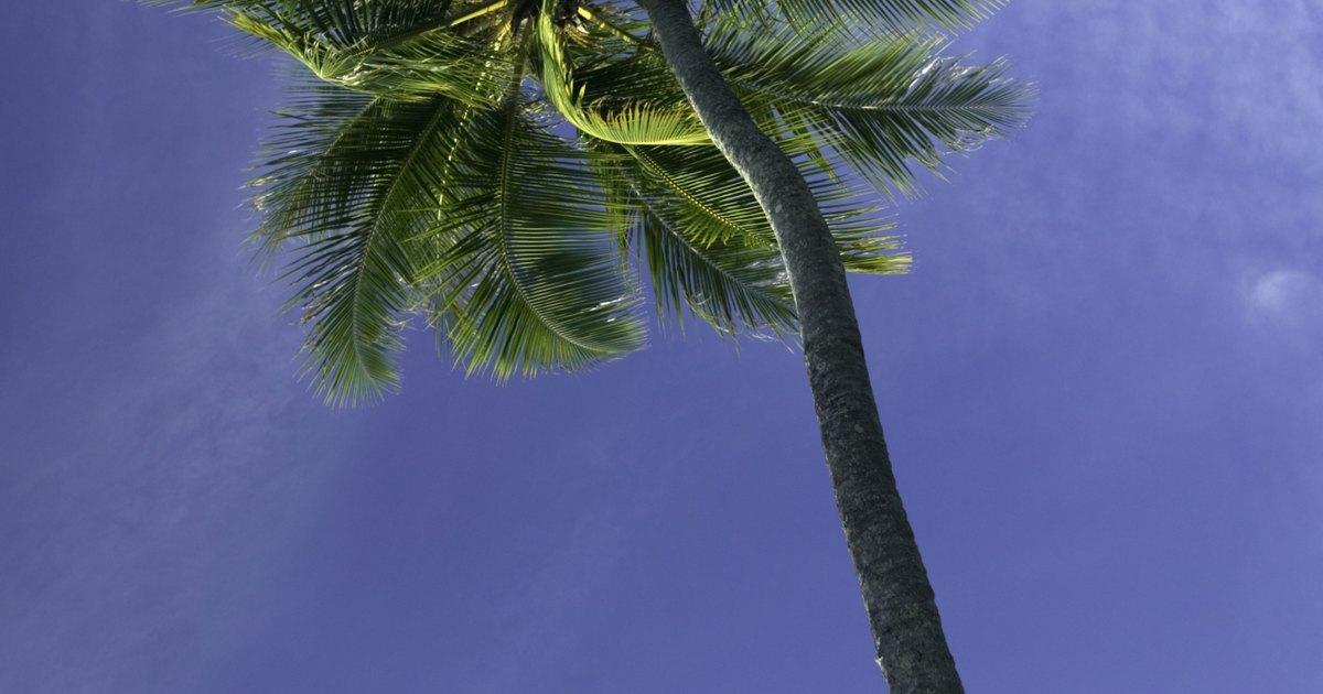 C mo hacer palmeras de jungla f cilmente ehow en espa ol - Como hacer una palmera artificial ...