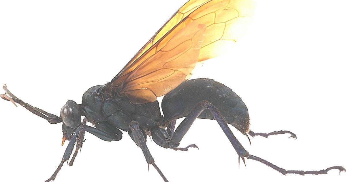 Types of stinging flying insects   eHow UK - photo#9