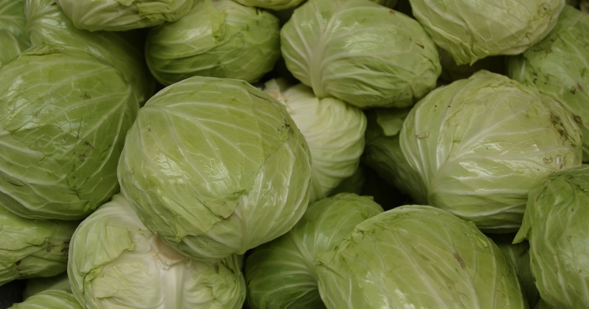 Using Food Processor To Grate Cabbage
