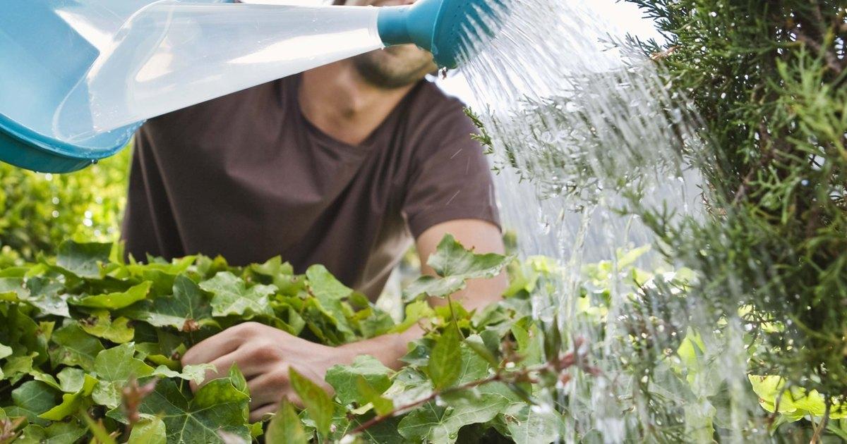 Crecen mejor las plantas con agua destilada embotellada o del grifo ehow en espa ol - Agua embotellada o del grifo ...