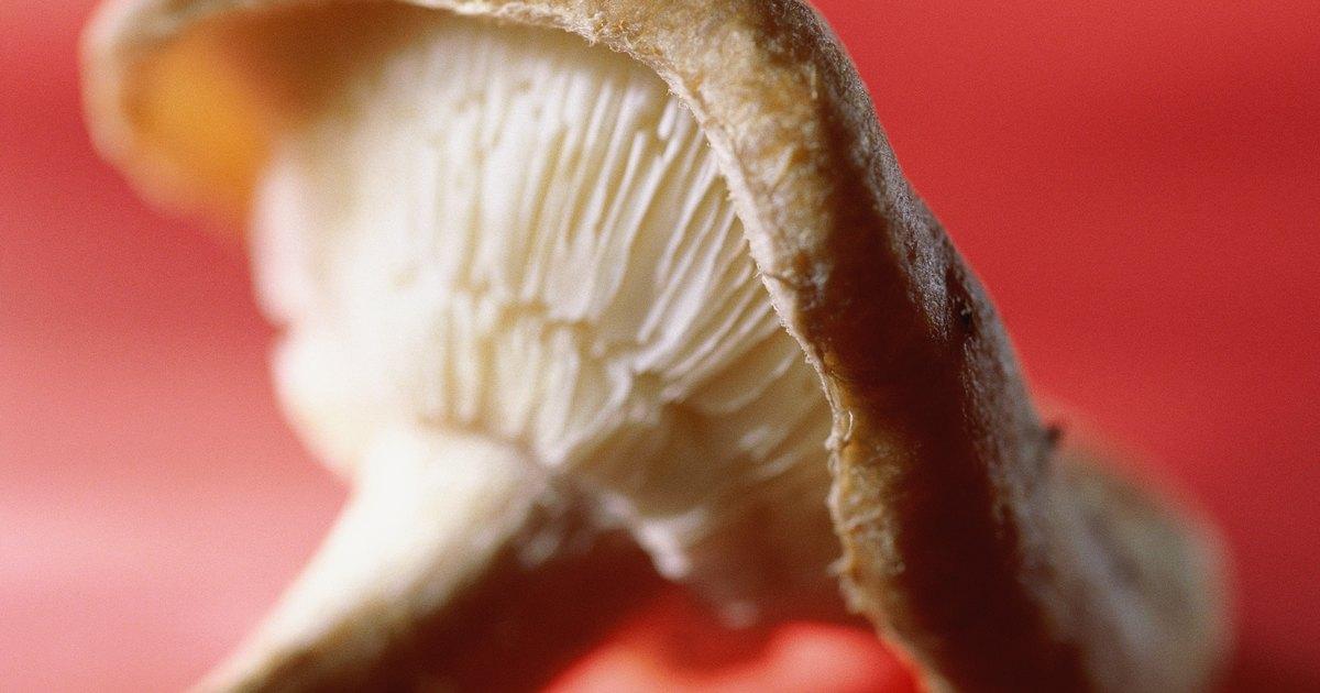 La uña encarnada como curar en el pie