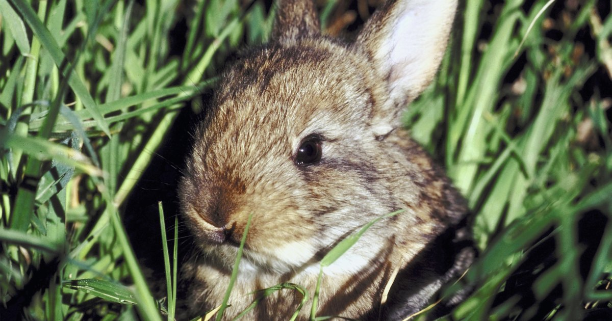 How To Keep Rabbits From Eating Grass Ehow Uk