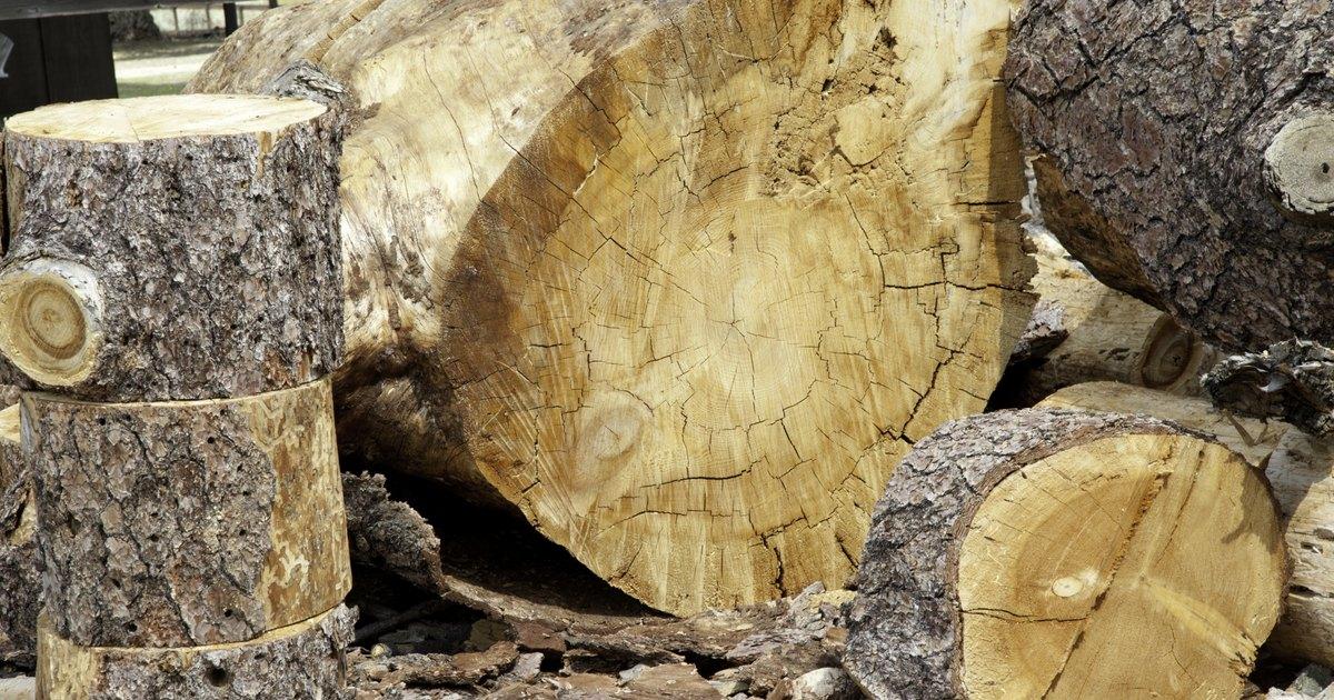 C mo limpiar el moho y los hongos de la madera ehow en - Como limpiar hongos de la pared ...