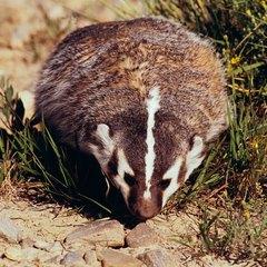 Worksheet. Lista de animales que hibernan  eHow en Espaol