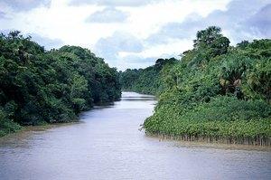 Ervas da Amazônia para tratamento do câncer