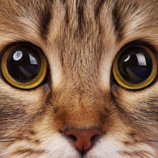 As 10 ra as de gato mais amig veis ehow brasil for Red transparente para gatos