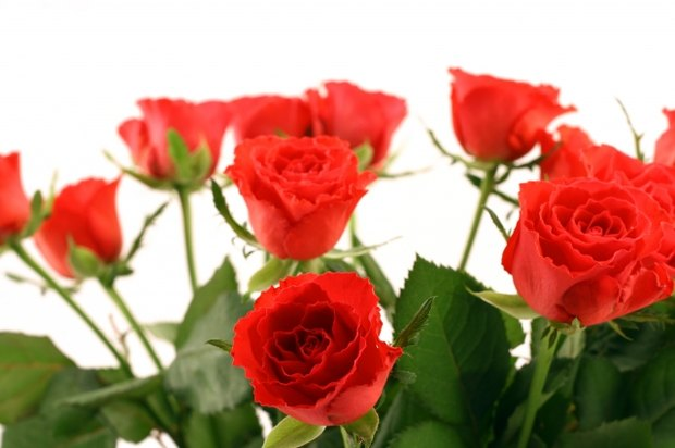 how much does a dozen roses cost ehow uk