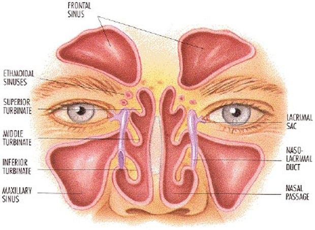 post nasal drip diagram | Diarra