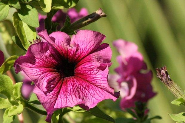 qu plantas colgantes de exterior pueden soportar el sol pleno y el calor