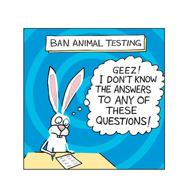 argumentative essay testing on animals Should animals be used for scientific or commercial testing read pros and  cons in the debate.
