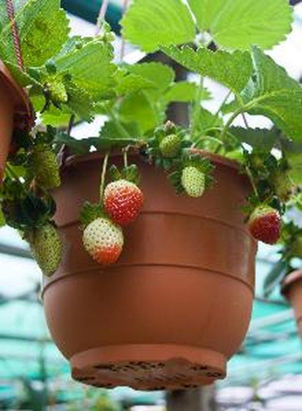 frutas en jardines de macetas | ehow en español