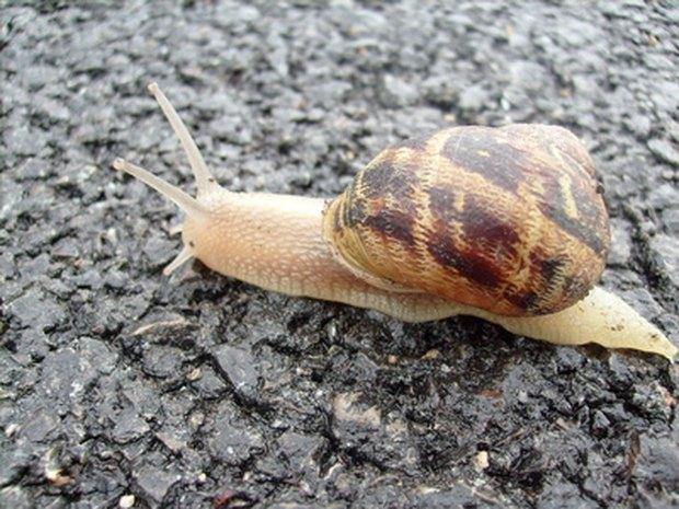 Resultado de imagem para escargots