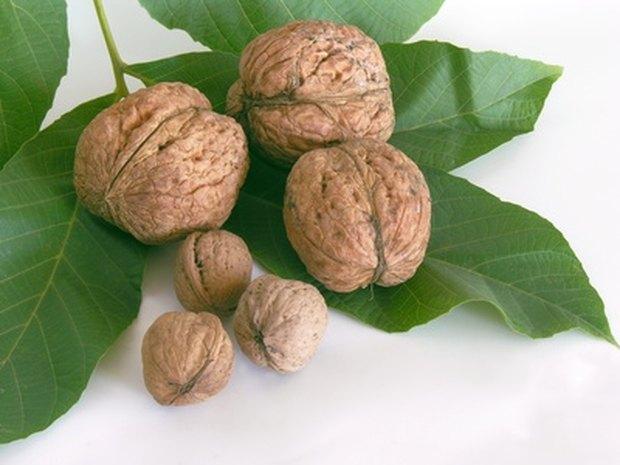acido urico alto alimentos terapia natural para la gota metabolismo del acido urico bioquimica